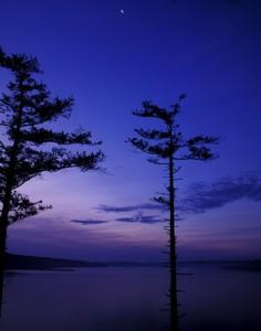 Pre-Dawn_Purple